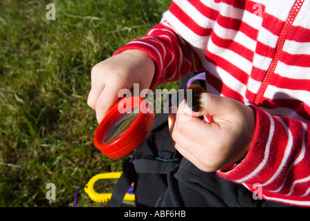Ein junges Mädchen studiert 4 Jahre eine Raupe auf die gemeinsame Weide in Newburyport MA - Stockfoto