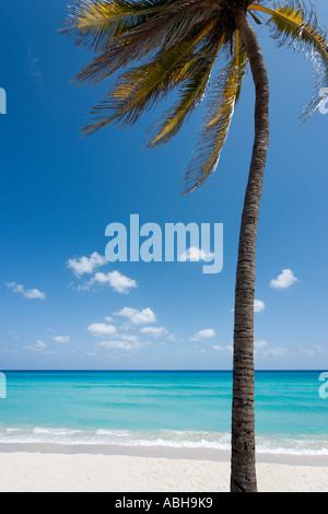 Einsame Palme auf der Strand, Varadero, Kuba, Karibik - Stockfoto