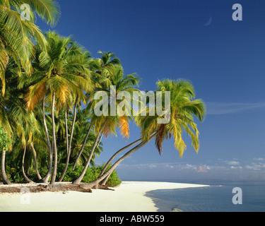 Mv-Malediven: Strand entlang des Indischen Ozeans - Stockfoto