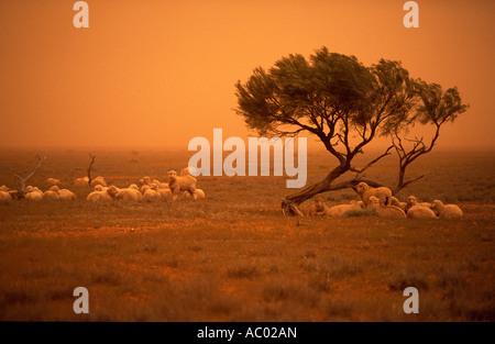 Duststorm, in der Nähe von Broken Hill, New South Wales, Australien - Stockfoto