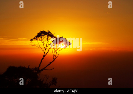 Gum-Baum bei Sonnenuntergang Mt Hotham Victoria Australia - Stockfoto