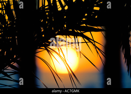 Palme, die Silhouette gegen den Sonnenuntergang - Stockfoto