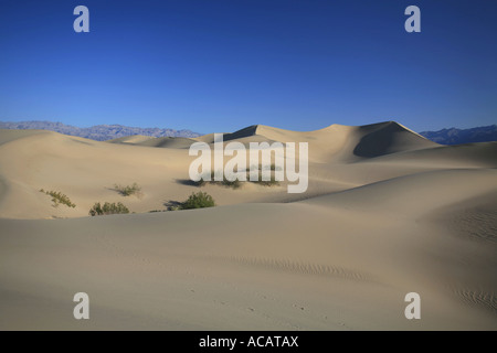Sanddünen mit Mesquite Flats, Death Valley, Kalifornien, USA - Stockfoto