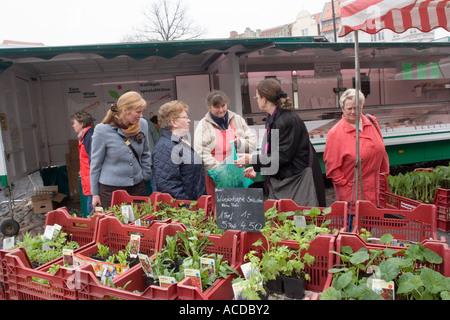 Markt im Marktplatz in Wismar, Mecklenburg-Vorpommern, Deutschland - Stockfoto