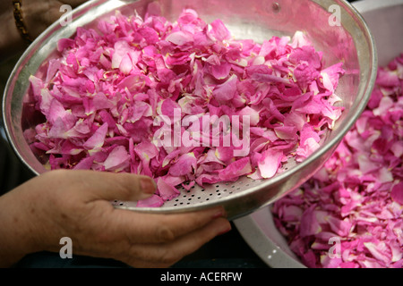 Rosenblätter für Marmelade vorbereiten - Stockfoto