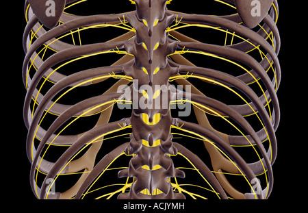 Intercostalneuralgie Symptome