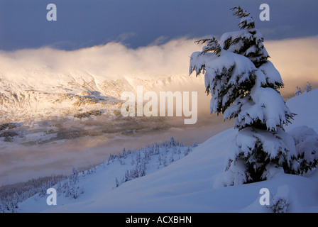 Alaska Chugach National Forest Winterlandschaften auf Turnagain Pass - Stockfoto