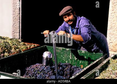 Portugal-portugiesische Portwein Männer testen Trauben - Stockfoto