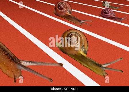 Schneckenrennen - Stockfoto