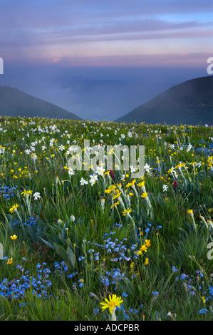 wilde Blumen wachsen die Forca Canapine Monti Sibillini Nationalpark Umbrien Italien NR Stockfoto