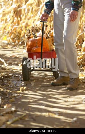 Kaukasische senior Frau Herbst Maisfeld roten Wagen mit frischen Kürbissen und Korb mit Mais durchziehen - Stockfoto