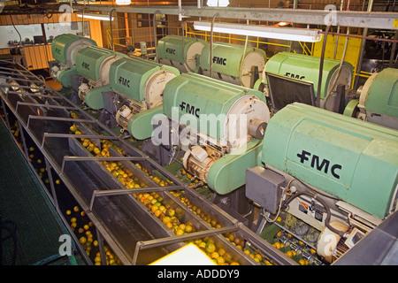 Zitrus-Verarbeitung-Fabrik in Belize - Stockfoto
