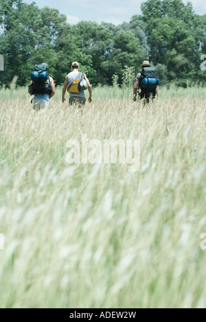 Drei Wanderer zu Fuß durch Feld, Rückansicht - Stockfoto