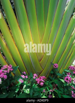 Nahaufnahme der Baum mit lila Blüten Stockfoto, Bild: 162568182 - Alamy