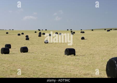 Kunststoff schwarz umwickelt von Heuballen in einem englischen Feld - Stockfoto