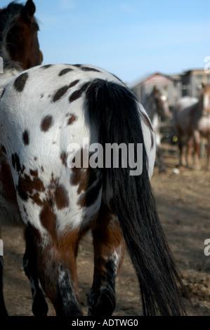 Arsch pferde pferd tube