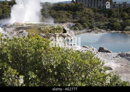 TE PUIA Rotorua auf der Nordinsel Neuseeland kann mit Blick auf den blauen Pool mit Dampf stieg von Pohutu Geysir