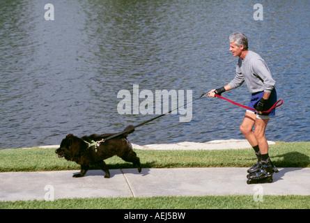 attraktive Reife Mann grau grau weißes Haar Inlineskaten mit Hund Training Spaß Haustier Leine POV USA Herr © Myrleen - Stockfoto