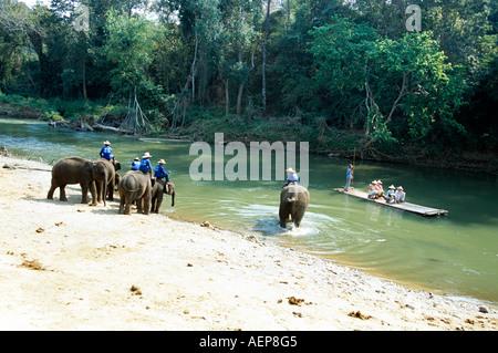 Elefanten am Ufer des Flusses, Mae Ping Elephant Training Camp, Mae Ping, in der Nähe von Chiang Mai, Thailand - Stockfoto