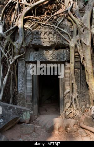 Feine Schnitzereien auf ein Tor, umgeben von Baumwurzeln in Ta Prohm Tempel in der Nähe von Angkor Wat in Kambodscha - Stockfoto