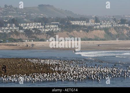 Kalifornien Dana Point Möwen Strand hang Wohnungen - Stockfoto