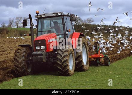 Möwen nach Traktor Pflügen neue Furchen im Feld bei Gargrave Yorkshire Dales uk - Stockfoto