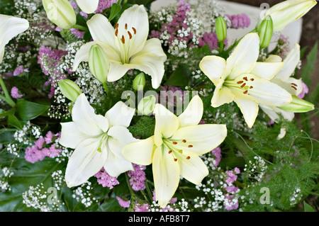 Blumen-Arrangement der weiße gelbe Taglilie oder Taglilie Costa ...