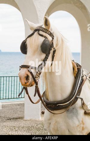 Weiße Arbeitspferd mit Scheuklappen in Nerja Spanien - Stockfoto