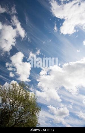 Baumkronen vor blauem Himmel mit Wolken - Stockfoto