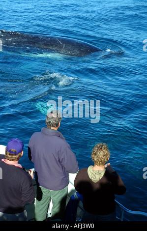 Ökotouristen juvenile Buckelwal Impressionen Novaeangliae zu beobachten, wie es geht hinter Whale watching Boot - Stockfoto