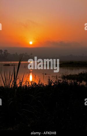 Sonnenaufgang über dem See und afrikanischen tropischen Regenwald, Ghana, Westafrika - Stockfoto