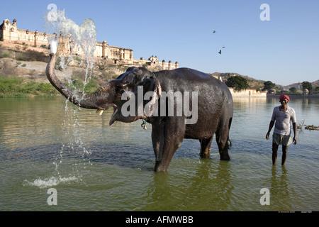 Elefant mit Mahout Baden im Fluss unterhalb der Amber Fort Jaipur Indien - Stockfoto