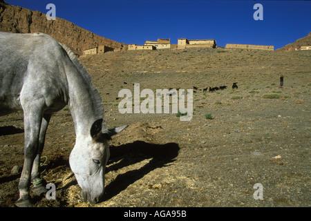 Maultier Weiden unter der Berber Dorf von Oulghazi Imilchil Bereich des hohen Atlas-Marokkos - Stockfoto