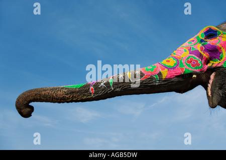 Bemalte Elefantenrüssel Elefanten sind für religiöse und zeremonielle Gelegenheiten dekoriert veröffentlicht Indien - Stockfoto
