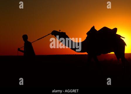 Mann an der Spitze eines Kamels, Silhouette von der untergehenden Sonne, Jaisalmer, Rajasthan, Indien - Stockfoto