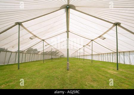 innere Leere riesige Zelt Festzelt auf Show New Forest vor Eröffnung - Stockfoto