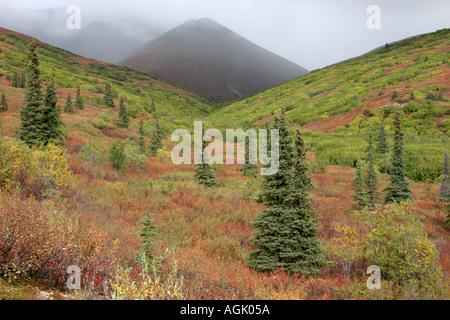 Herbstfarben im Denali Highway alaska Usa - Stockfoto