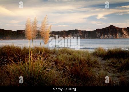 Sonnenaufgang über dem Sand Dune Lichtmenge Gräser Tolaga bay - Stockfoto