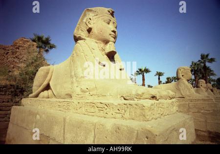 Eine Sphinx aus der Avenue Sphinxen bewachen den Eingang zu den Karnak Tempel, Luxor Ägypten. - Stockfoto
