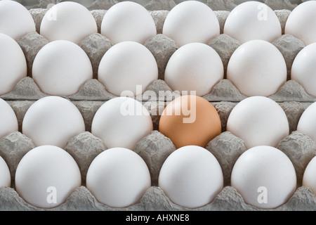 Eine braune Ei unter den vielen weißen Eiern - Stockfoto