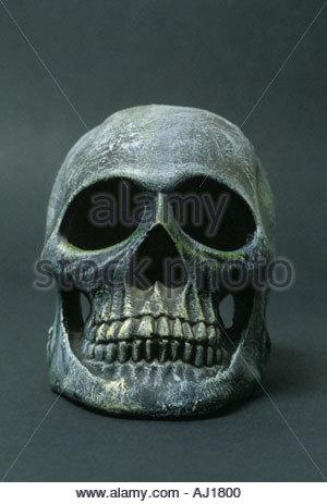 Schädel Kopf - Stockfoto