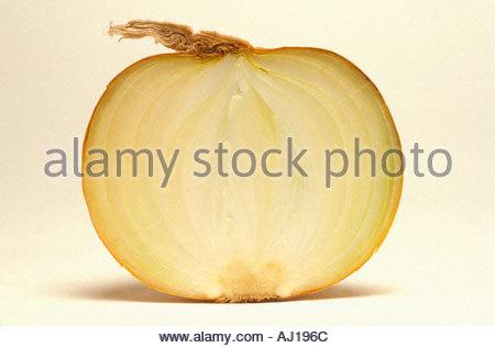 Querschnitt einer Zwiebel - Stockfoto