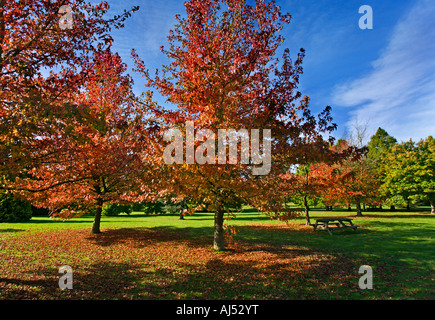 Herbstlaub in Sir Harold Hillier Gardens, Hampshire, England - Stockfoto