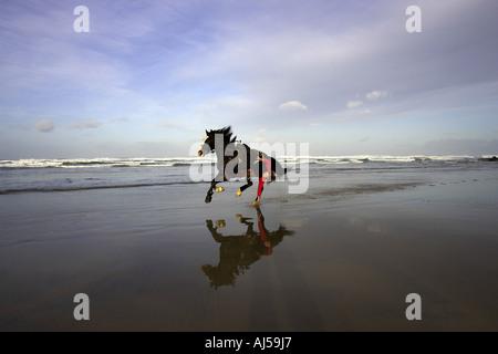 Reiterinnen Reiten am Rand der Meere - Stockfoto