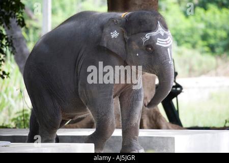 Sathya Gita. Sathya Sai Baba junger Elefant. Puttaparthi, Andhra Pradesh, Indien - Stockfoto