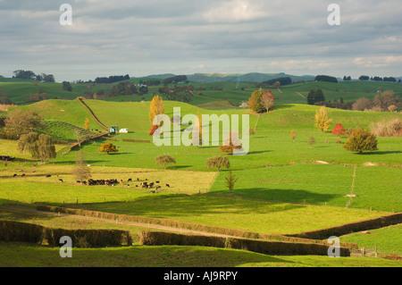Ackerland, Tihiroa, Nordinsel, Neuseeland - Stockfoto