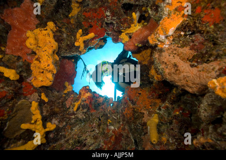 Frau Taucher Unterwasser suchen durch Loch bedeckt mit Inkrustieren Schwämme, Cozumel, Mexiko - Stockfoto