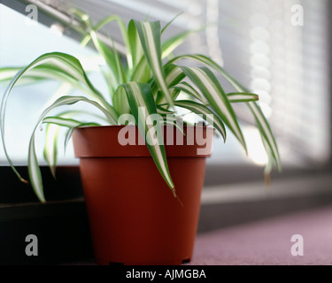 pflanzen auf der fensterbank stockfoto bild 310629504 alamy. Black Bedroom Furniture Sets. Home Design Ideas