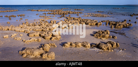 Stromatolithen (lebende Fossilien), Hamelin Pool, Welterbe Shark Bay, Westaustralien, Panorama, - Stockfoto
