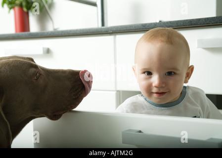 Baby-spähen aus Schublade in die Kamera, während Hund Nase leckt - Stockfoto